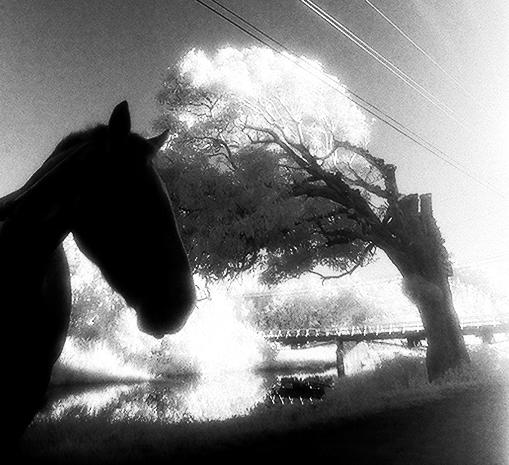 horse_o.jpg